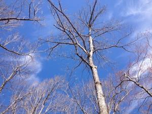 Trees for Gratitude