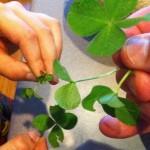 four-leaf-clover-150x150