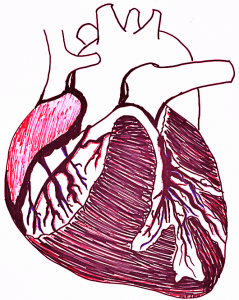 Human Heart Feb2016 ALP