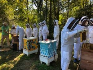 SAS employees in bee suits examine bee hives