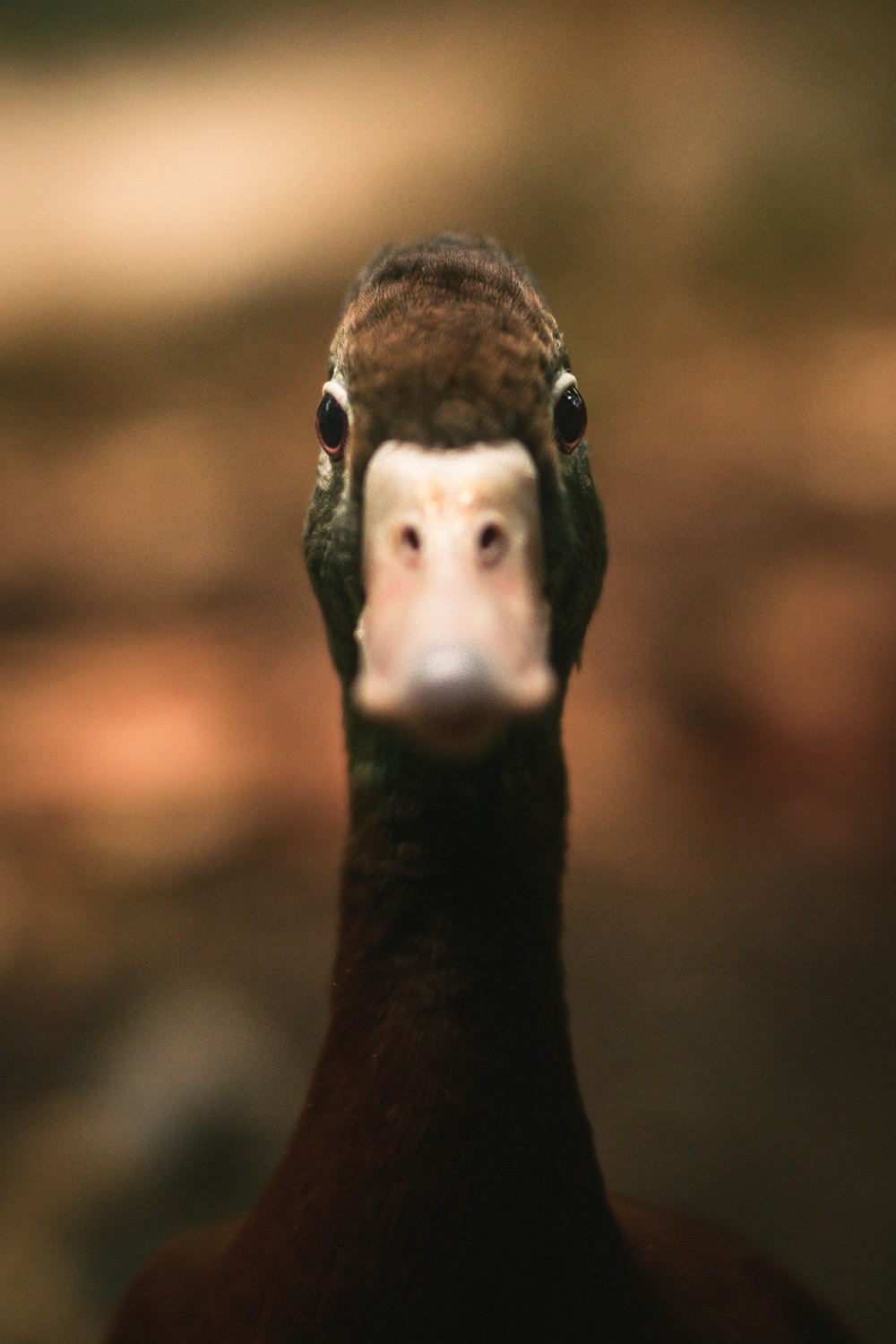 Hidden Insights: Are Your Ducks Barking? Spotting insurance fraud
