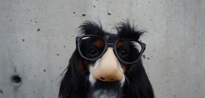 Hidden Insights: Are Your Ducks Barking? Spotting insurance fraud