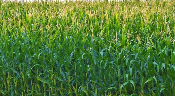Hidden Insights - How Analytics Enhances Sustainability in Agriculture
