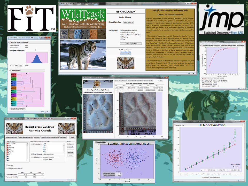 FIT in JMP for the Amur tiger.: Using FIT, we were able to do the first small-scale footprint census of free-ranging Amur tigers in North East China.