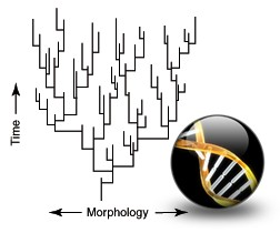 Morphology vs. Time