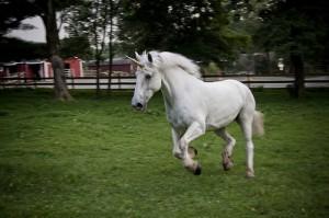 Unicorn in field