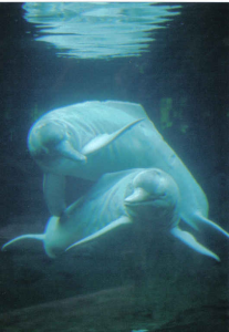 river_dolphins