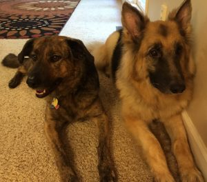image of two dogs - Willie and Willow