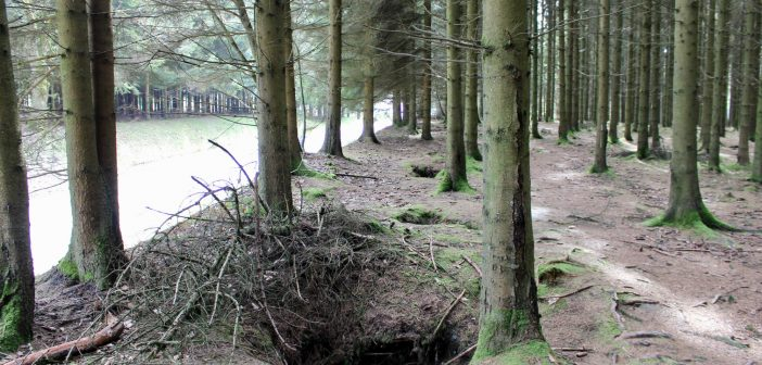 "101st Airborne ""Easy"" Company foxholes outside of Foy, Belgium"
