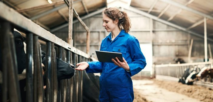 Female farmer with ipad checks on cows