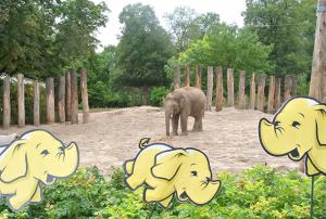 Elefanten patenschaft 2
