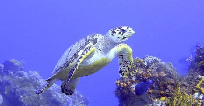 rochelle_turtle