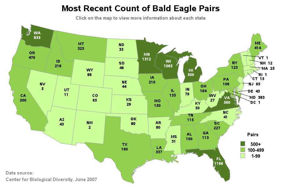 Bald eagles return to the United States The SAS Training Post