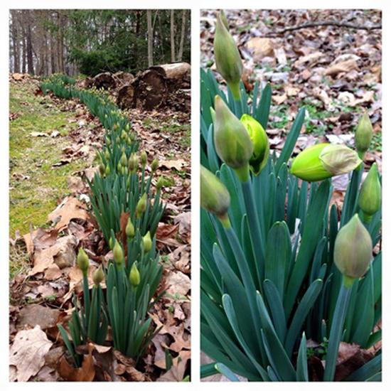 spring_david
