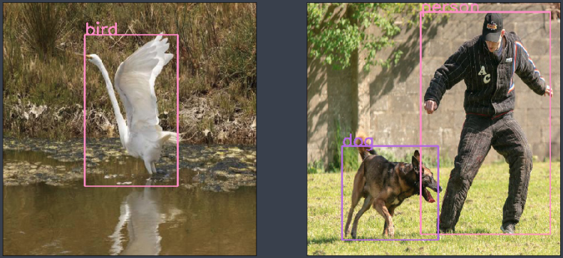 a bird a dog and a person are identified and labeled in these images